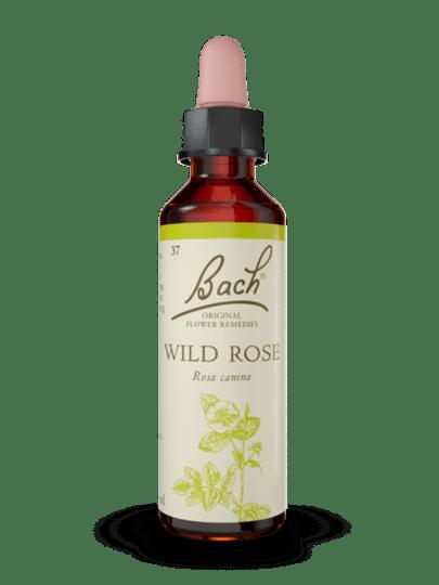 Chestnut Bud, Clematis, Honeysuckle, Mustard, Olive, Wild Rose en White Chestnut.